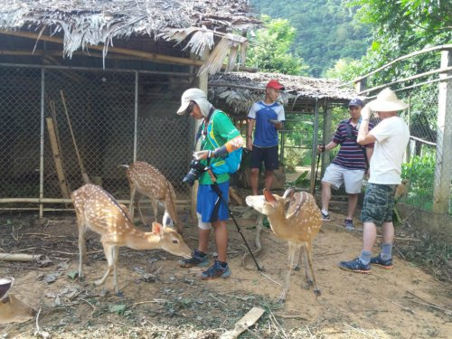 Learn How to raise Deers